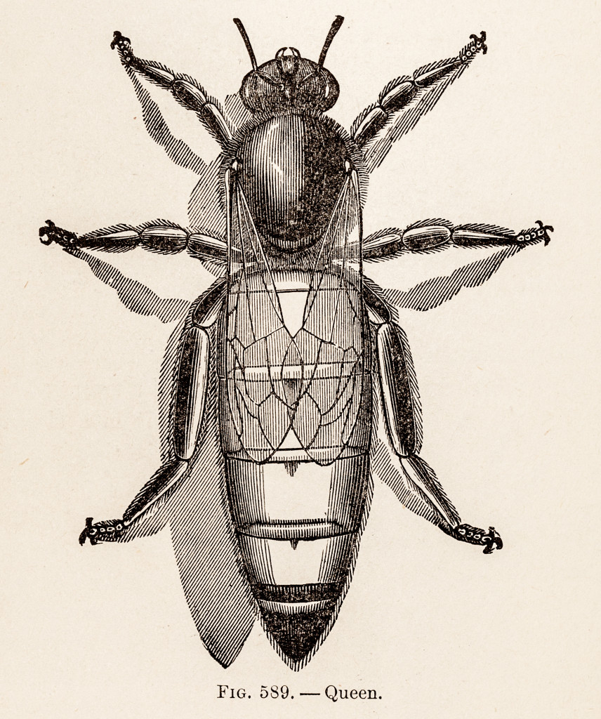 CZ-Farmers-Encyclopedia-153-1899-856x1024.jpg