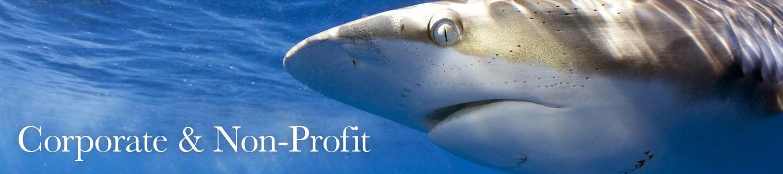 Corporate & Non-Profit Services