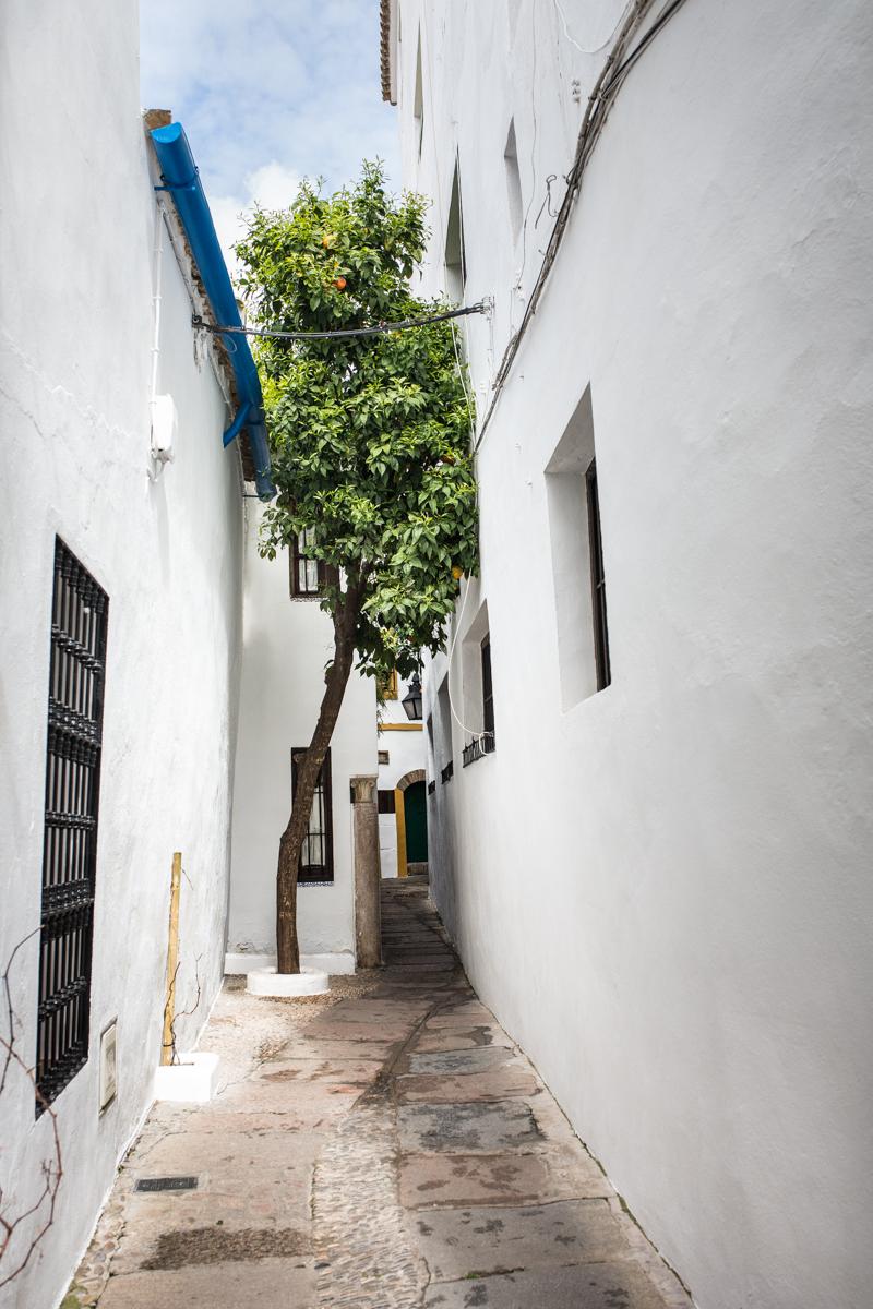 Calleja del Panuelo (Hankerchief alley)
