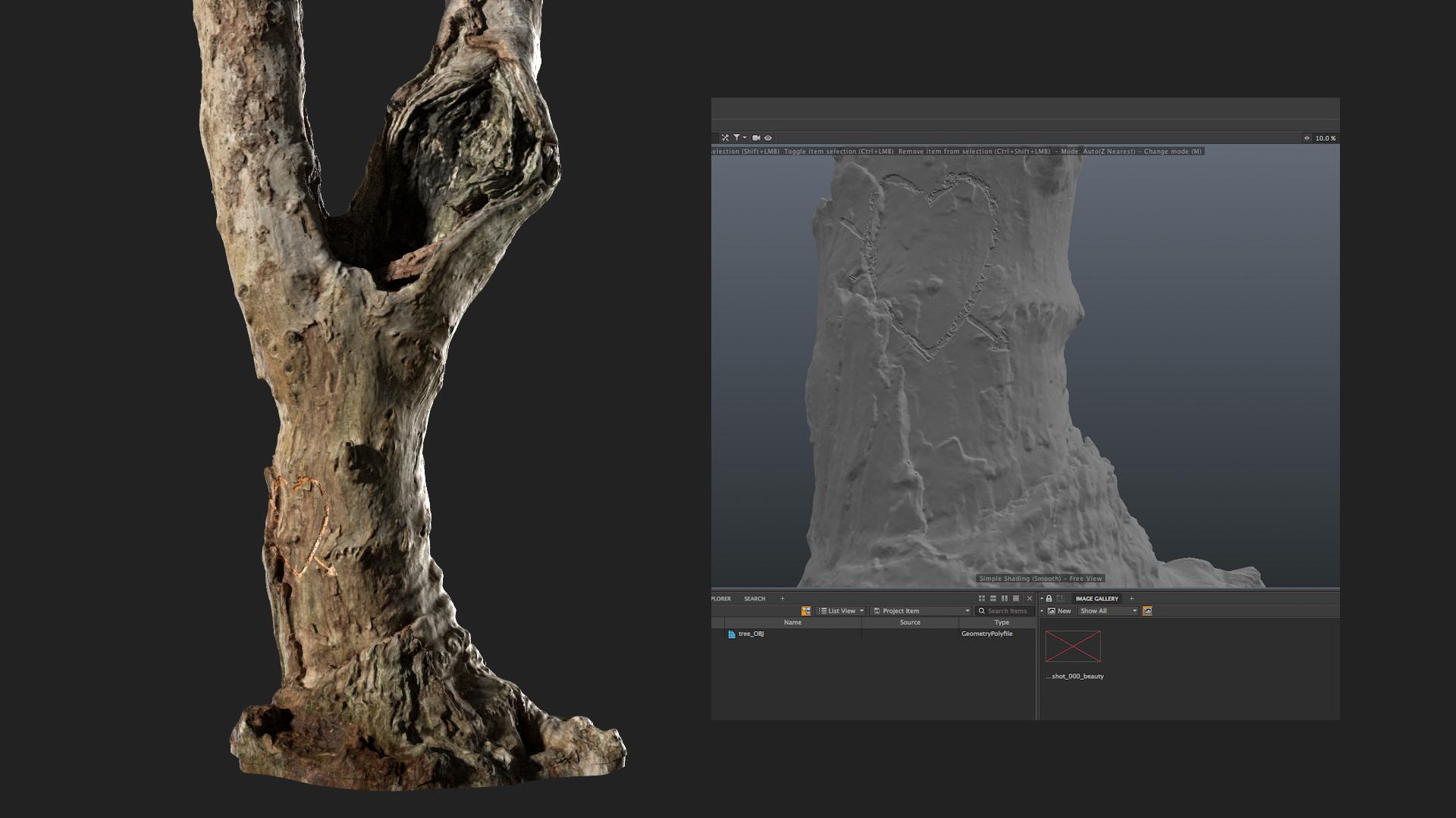 tree_closeup.png