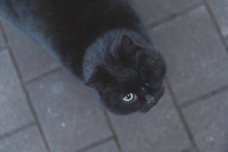 One eyed black fluffy cat