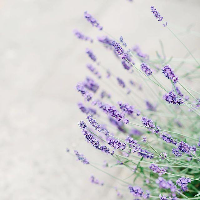 Summertime and the lavenders lovely 💕 #summertime #irishweddingphotographer #weddingphotography #weddingvenue #summerwedding