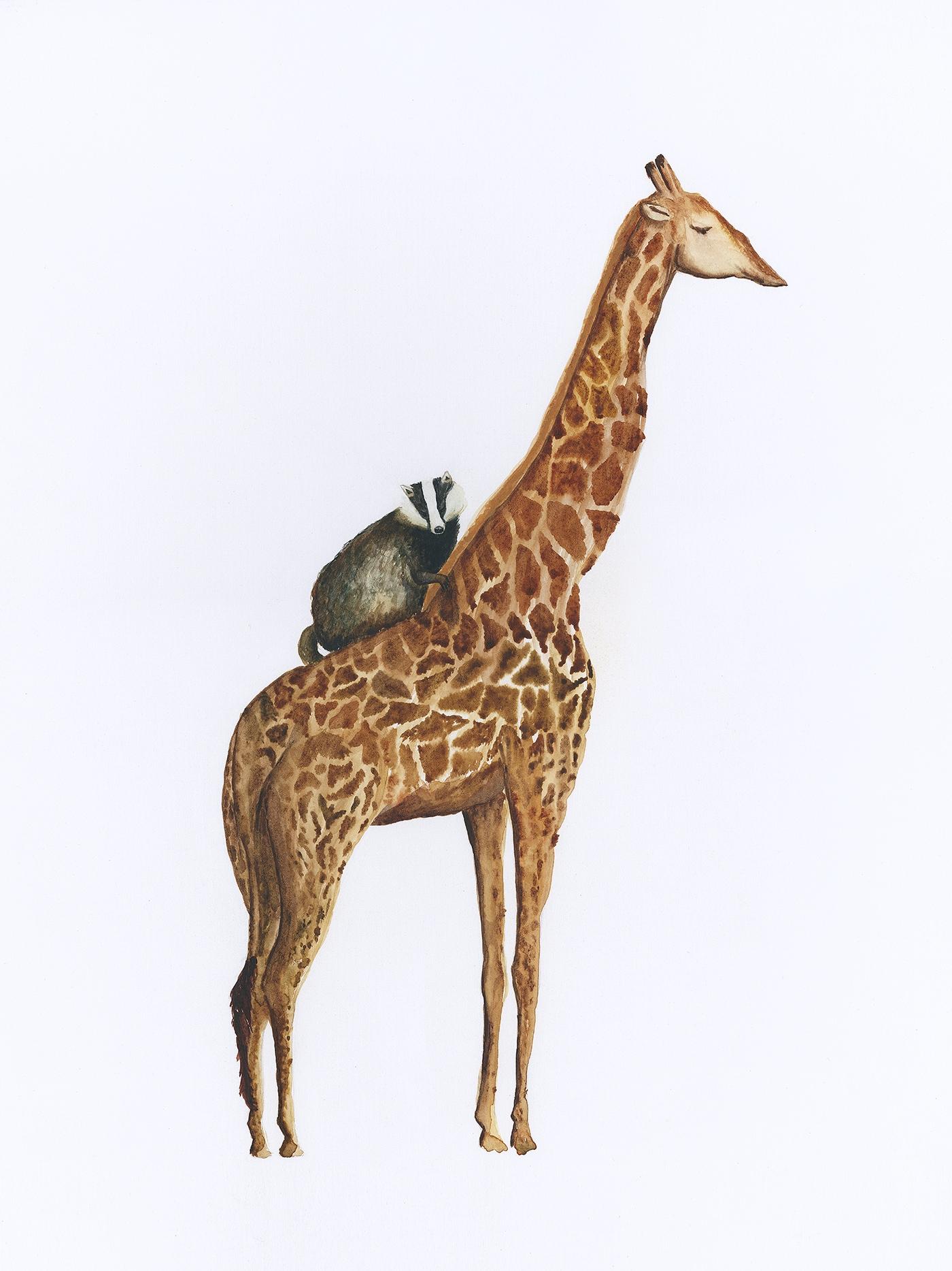 the badger and the giraffe.jpg