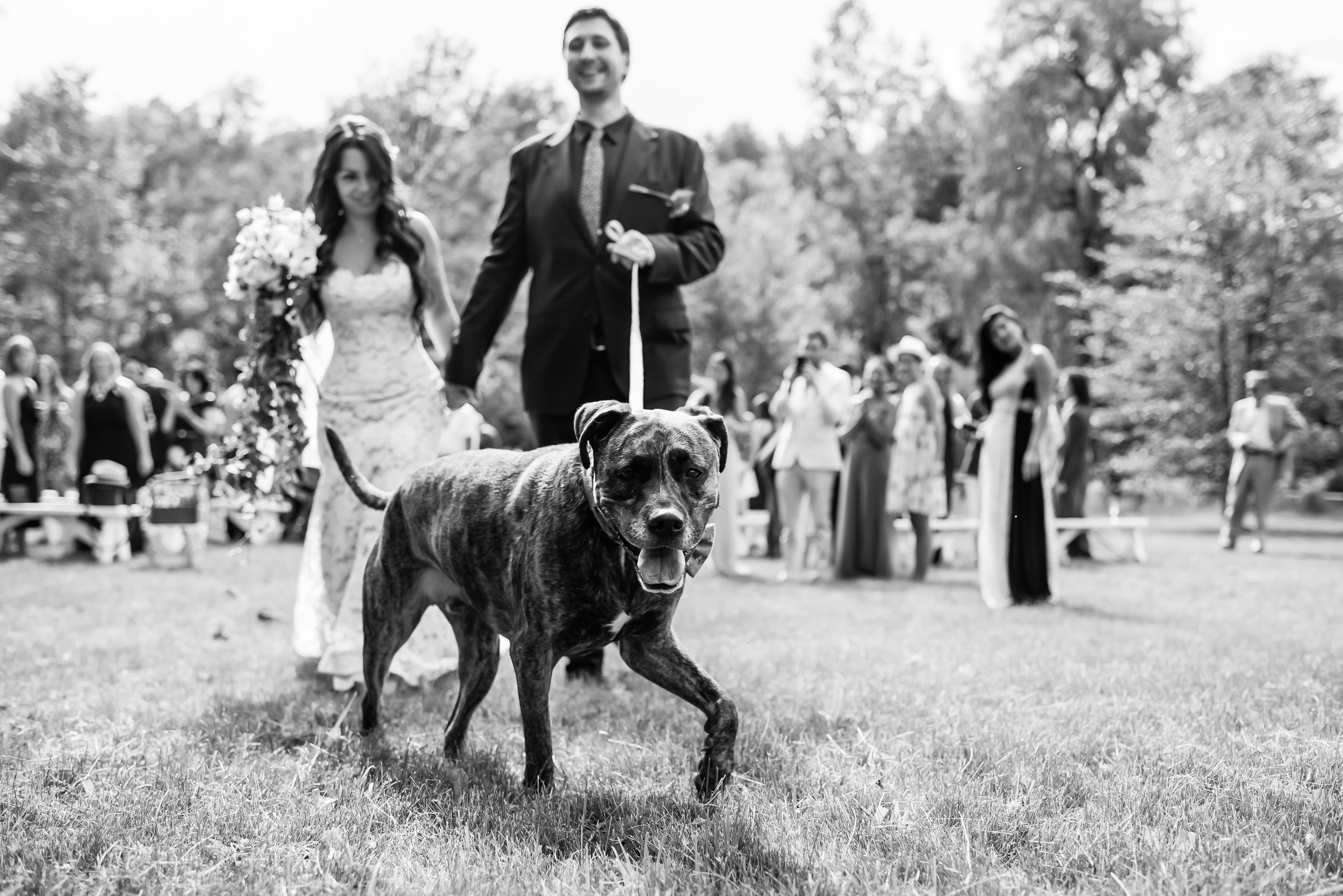 Stefy Hilmer Photography -bride and groom include dog into ceremony.jpg