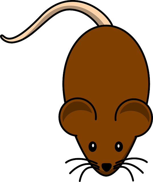 The Brown Rat