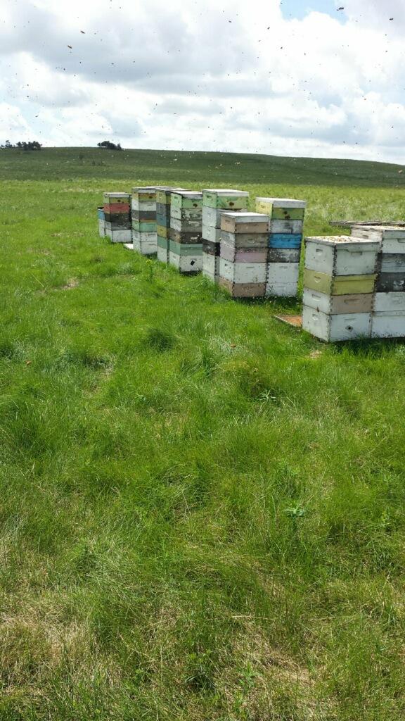 Beekeeping honey