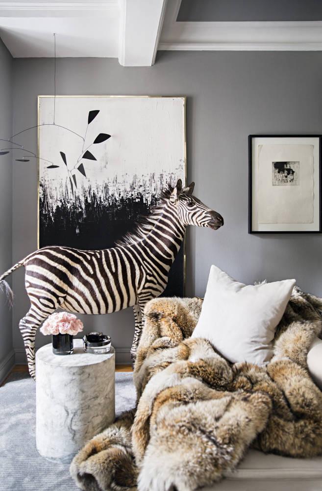 korban zebra