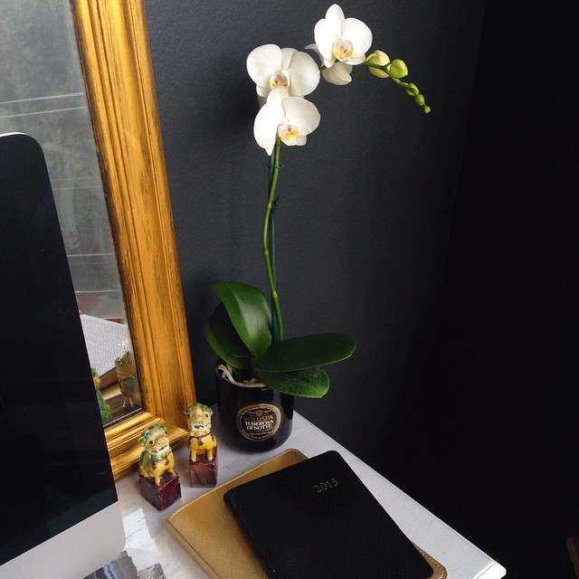 black gold orchid