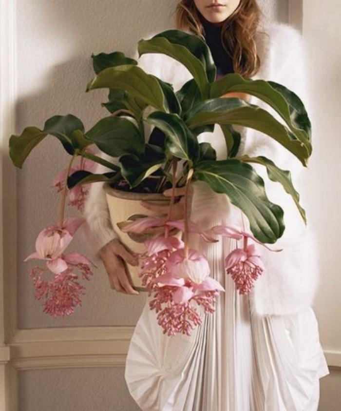 plantsssss.jpg
