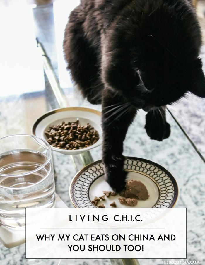 CAT CHIC.jpg