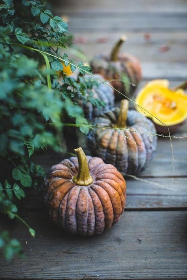 pumpkins october vibes.jpg