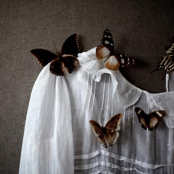 butterfliessss.jpg