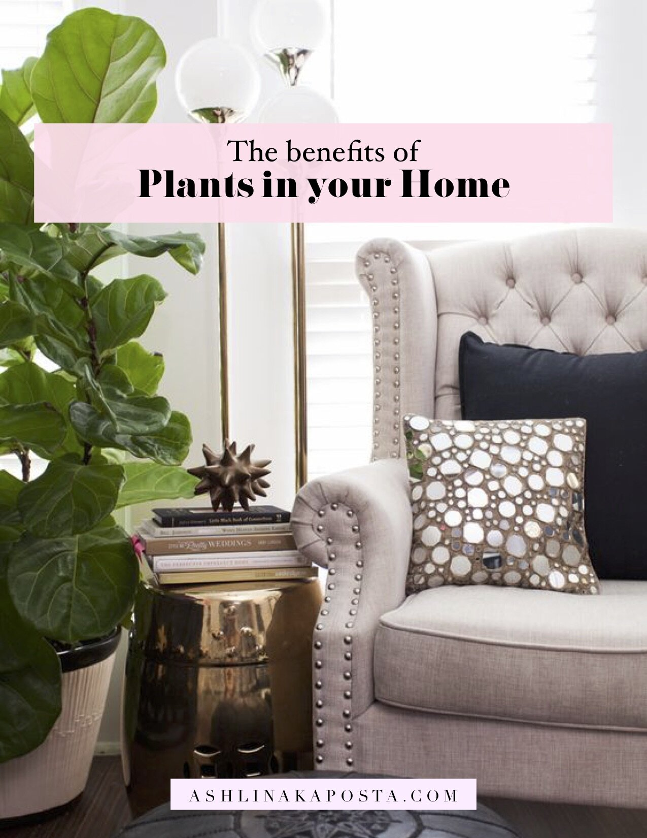 Interior Flow The Benefits Of Plants In Your Home 3 Feng Shui Tips Ashlina Kaposta
