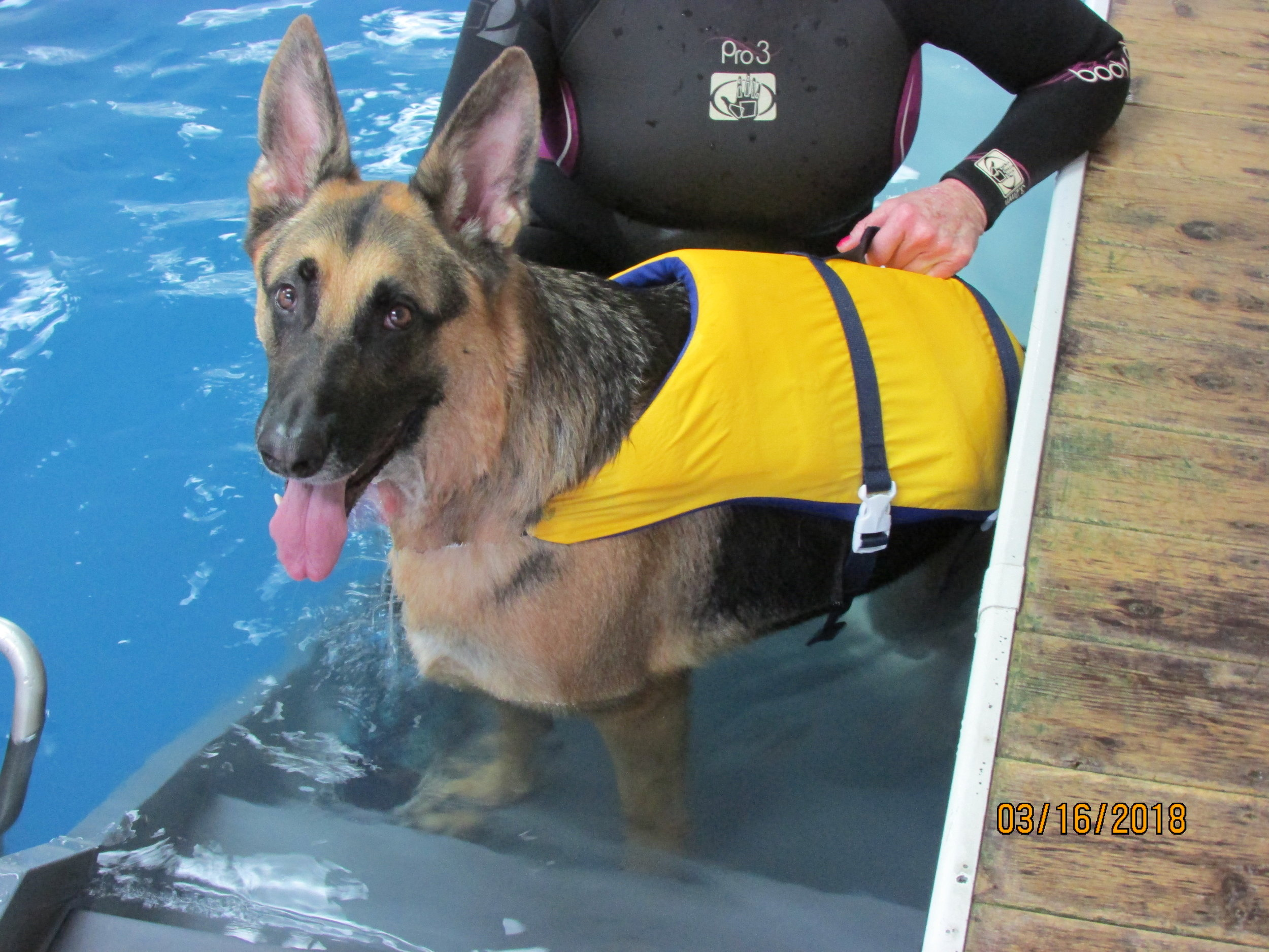 Jackie swimming with her dog Bode