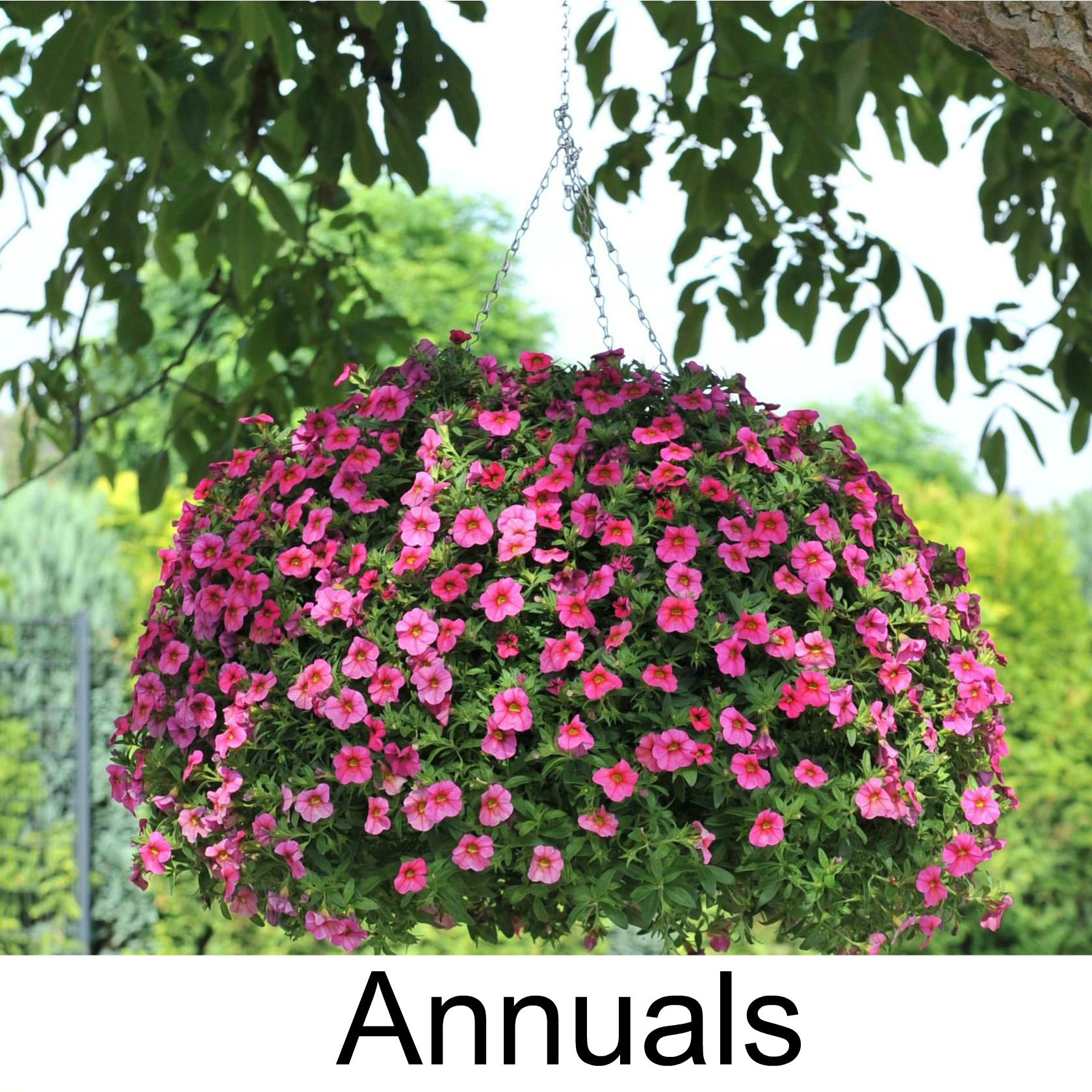 annuals3.jpg