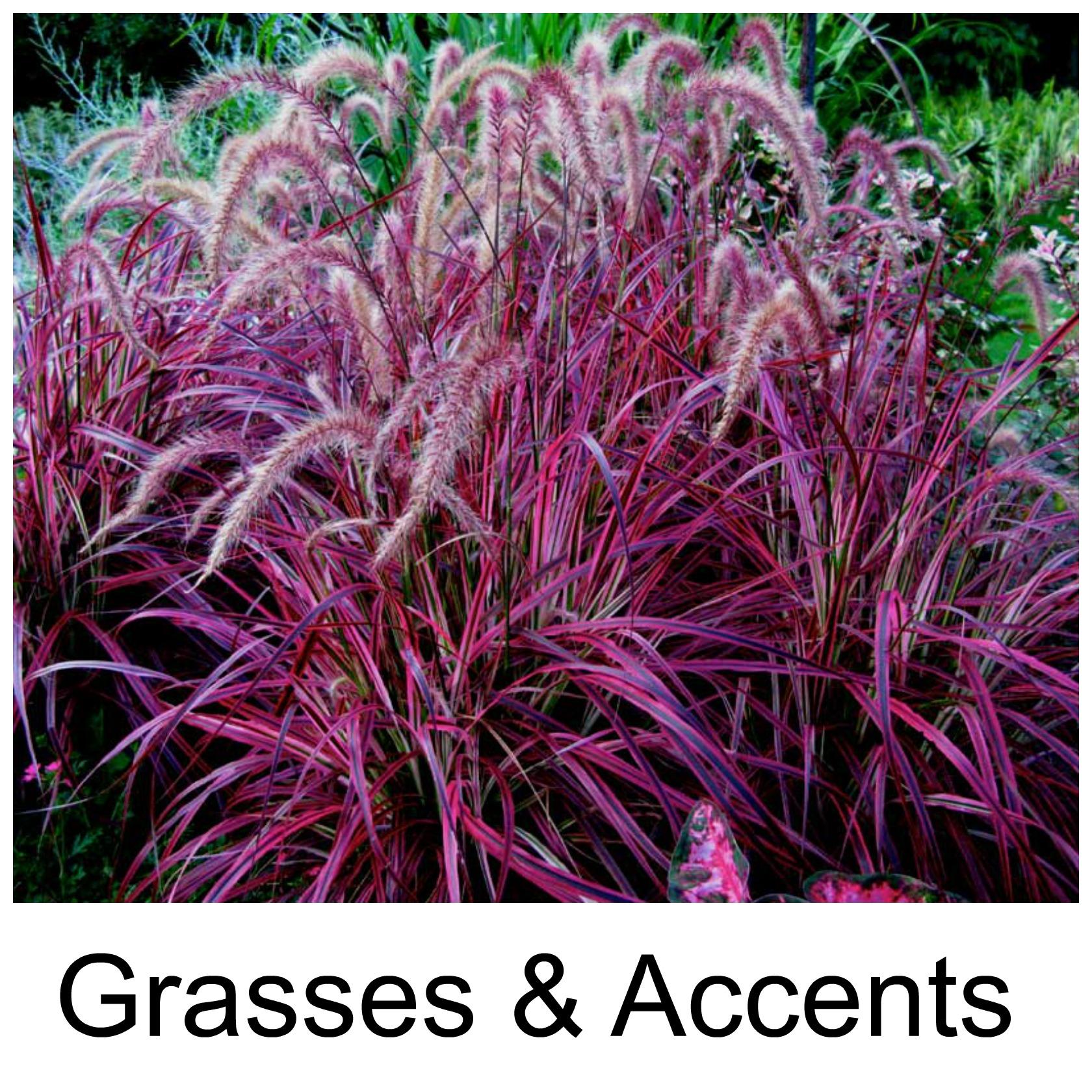 grasses3.jpg
