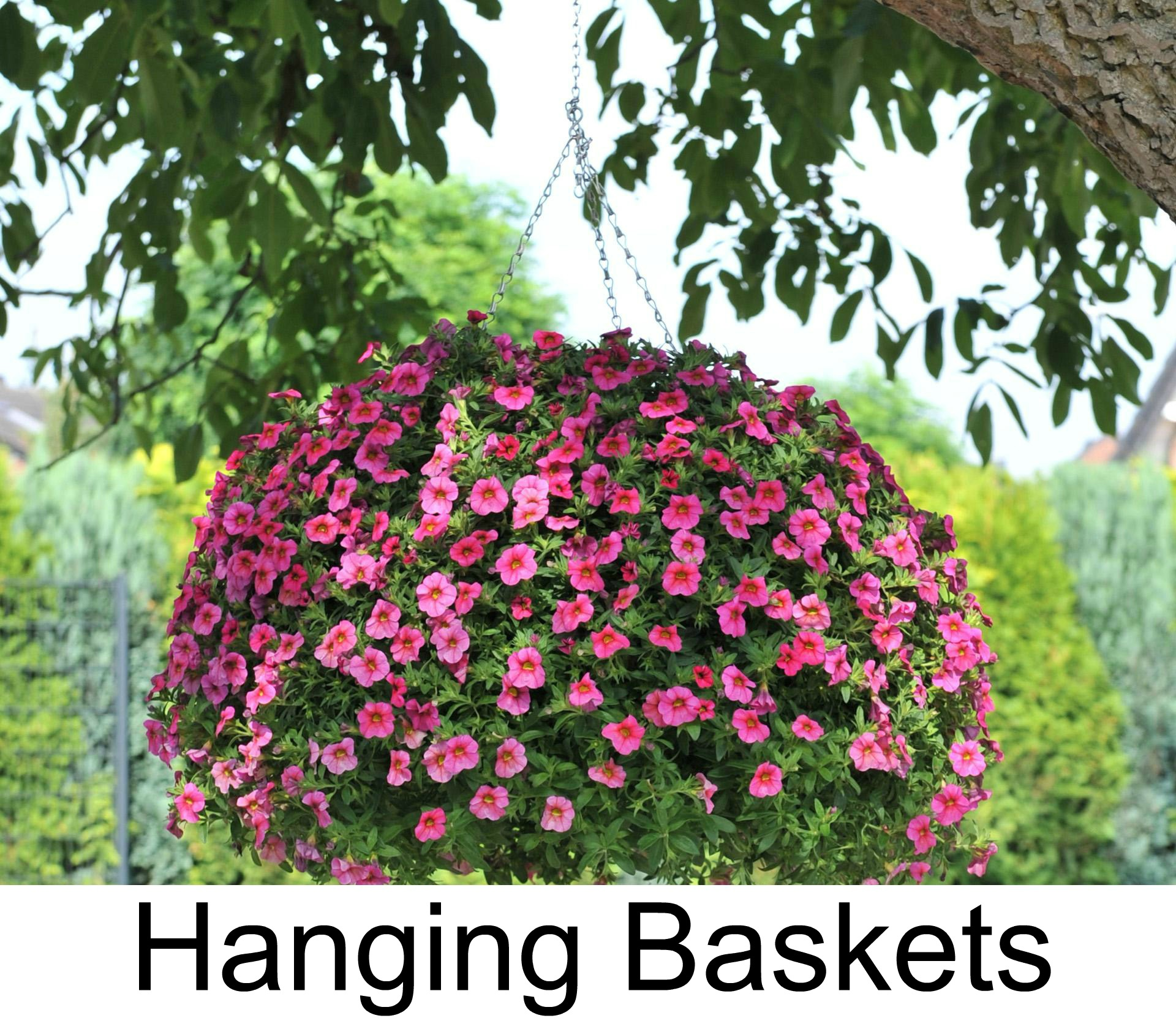 Hanging Basket3.jpg