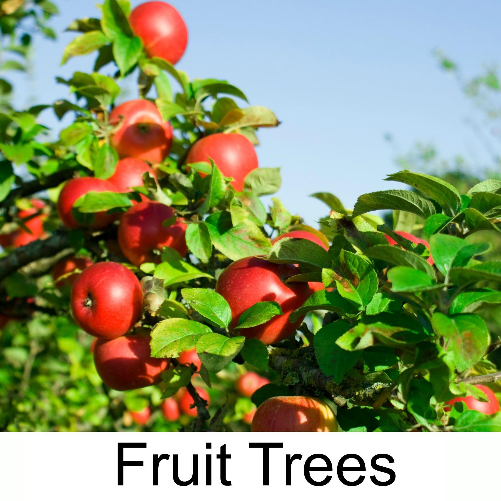 Fruit trees3.jpg