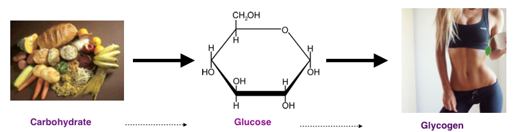 The body breaks down carbohydrates from food into glucose and stores the glucose as glycogen in the liver and muscle tissue.
