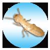 termite_link.png