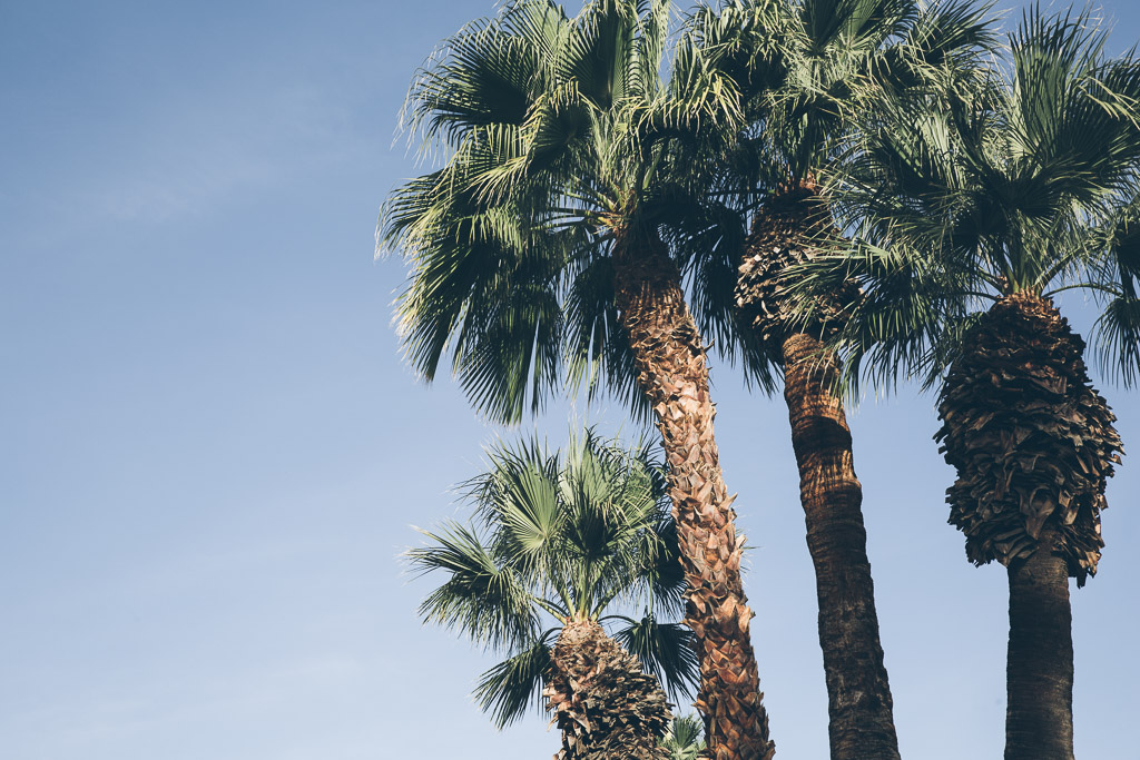 palm springs on millys-kitchen.com