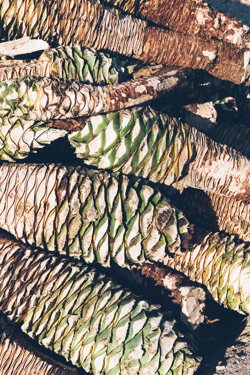 oaxaca on millys-kitchen.com