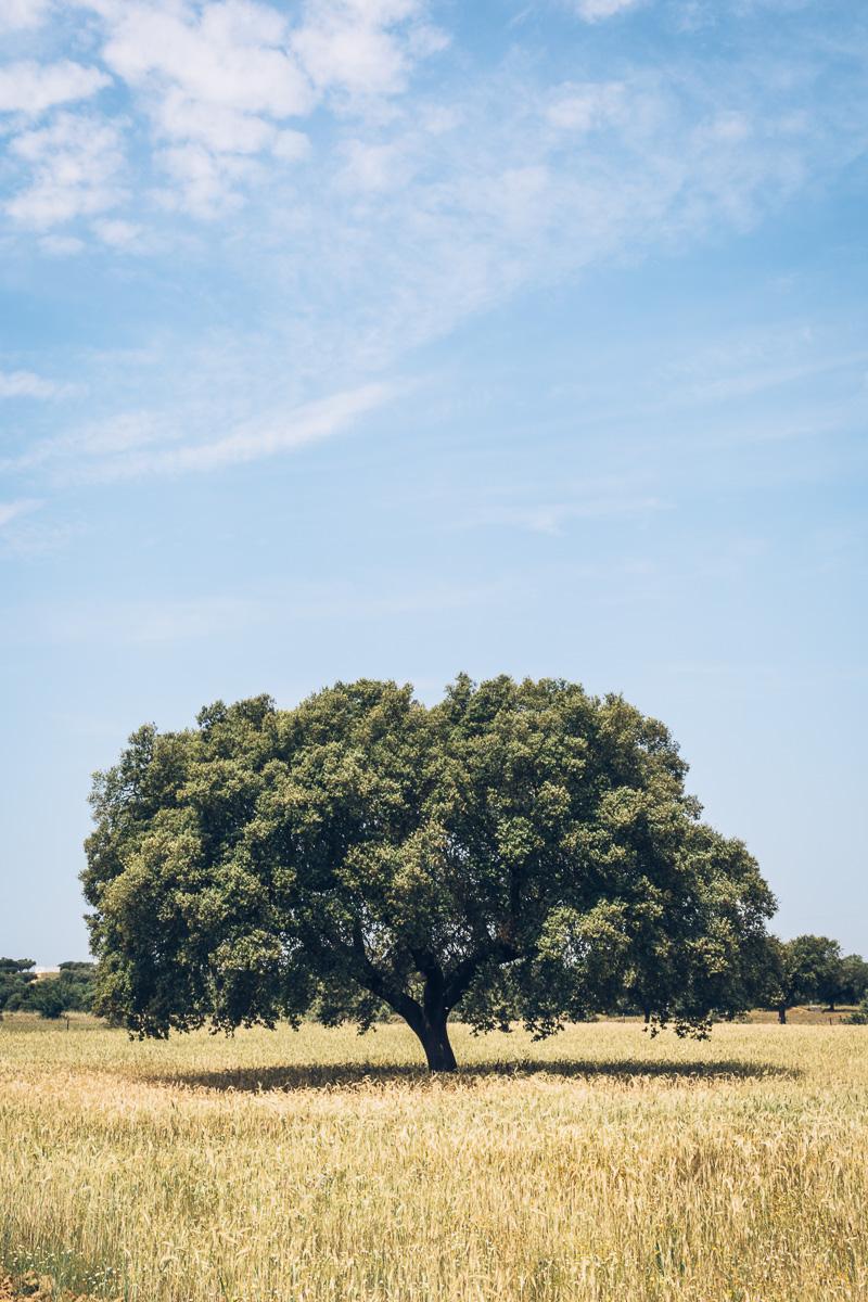 Image: Olaiya Land