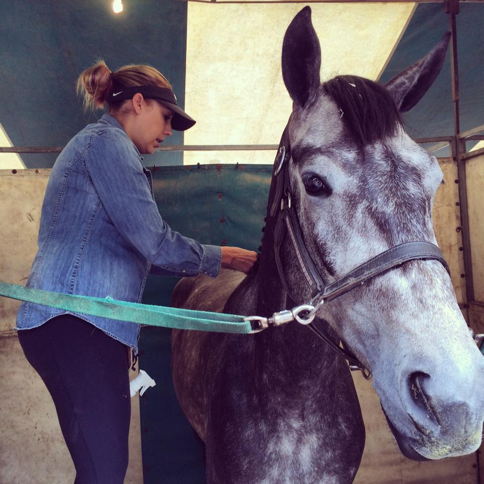 Finley is getting all pretty and ready to show!