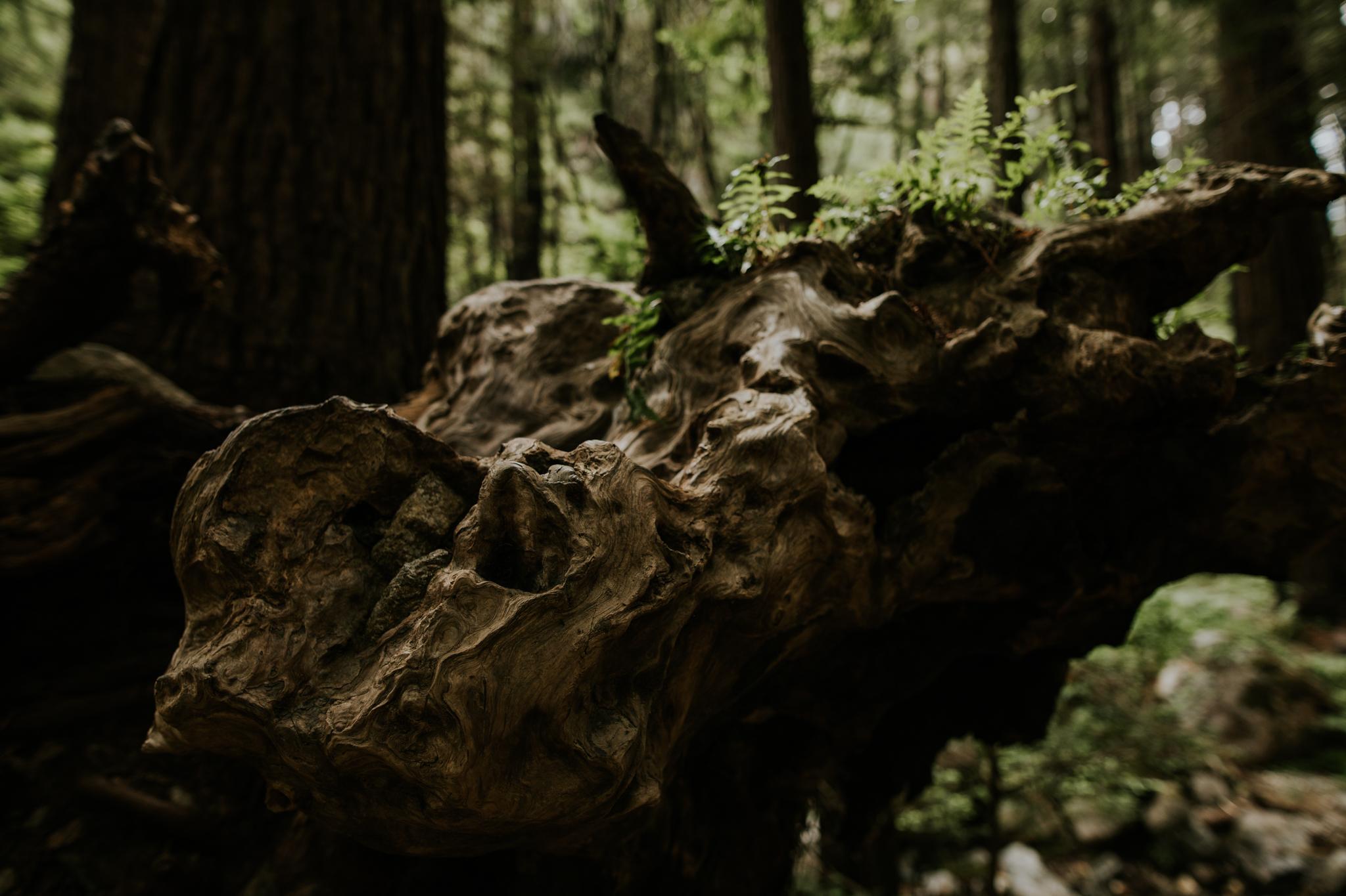 Limekiln State Park - Big Sur Elopement Photographer - Vow of the Wild