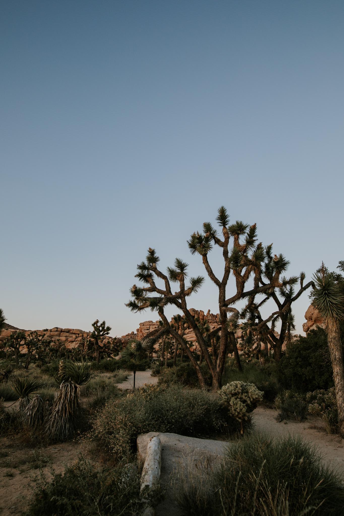 Joshua Tree Elopement Photographer - Vow of the Wild