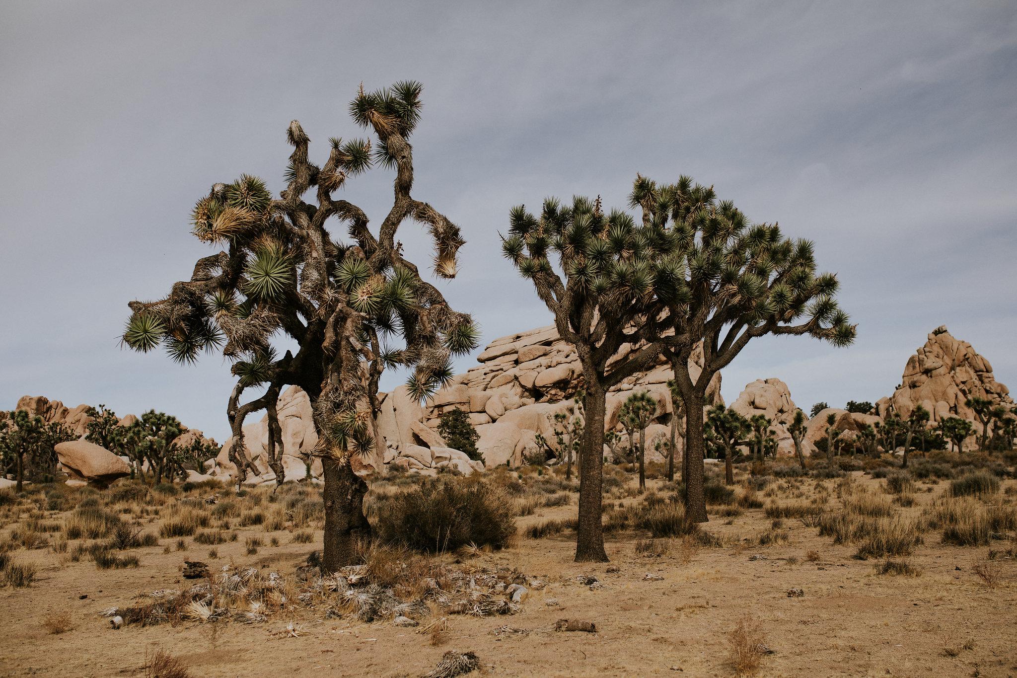 Joshua Tree Elopement Photographer - Destination Elopement Videographer - Joshua Tree Wedding - Vow of the Wild
