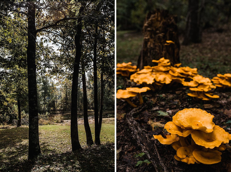 Adventurous Forest Elopement | Destination Elopement Photographer + Videographer | Same Sex Elopement | Vow of the Wild
