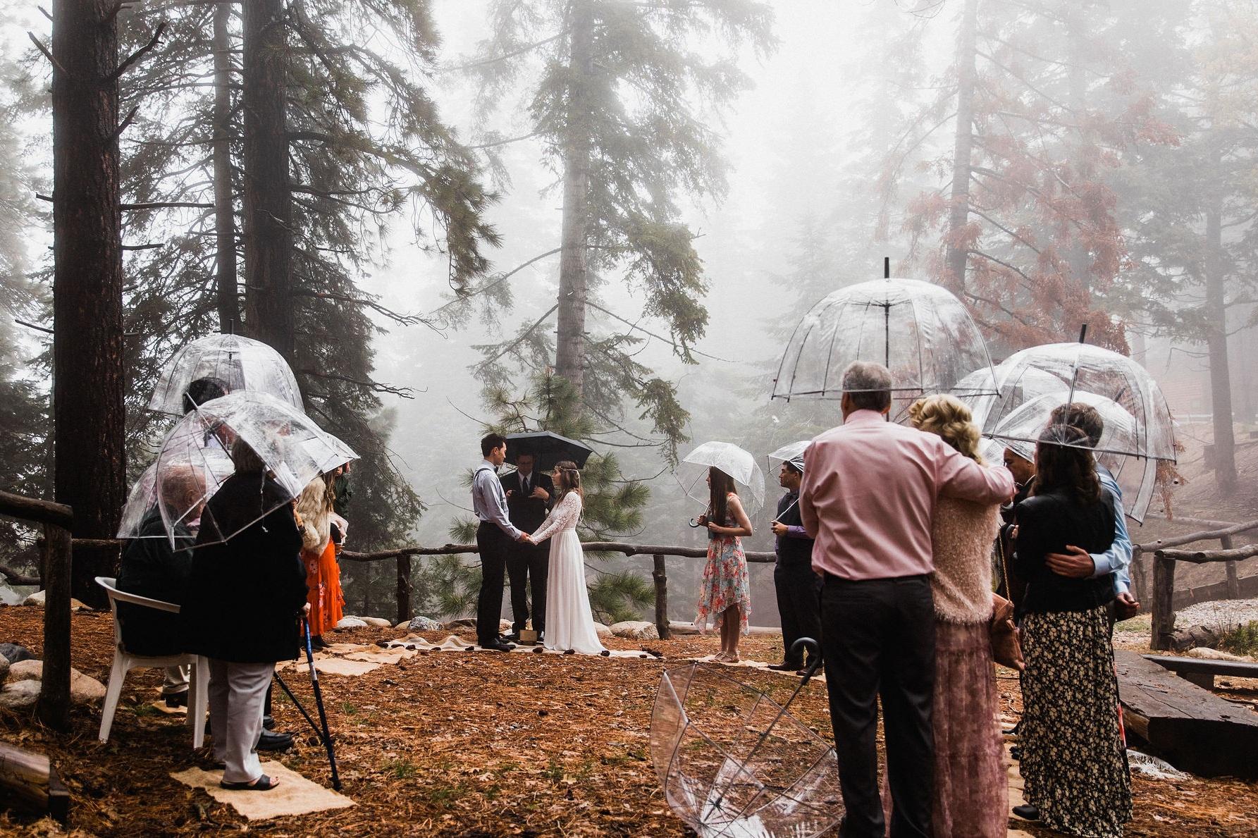 California Forest Elopement Photographer