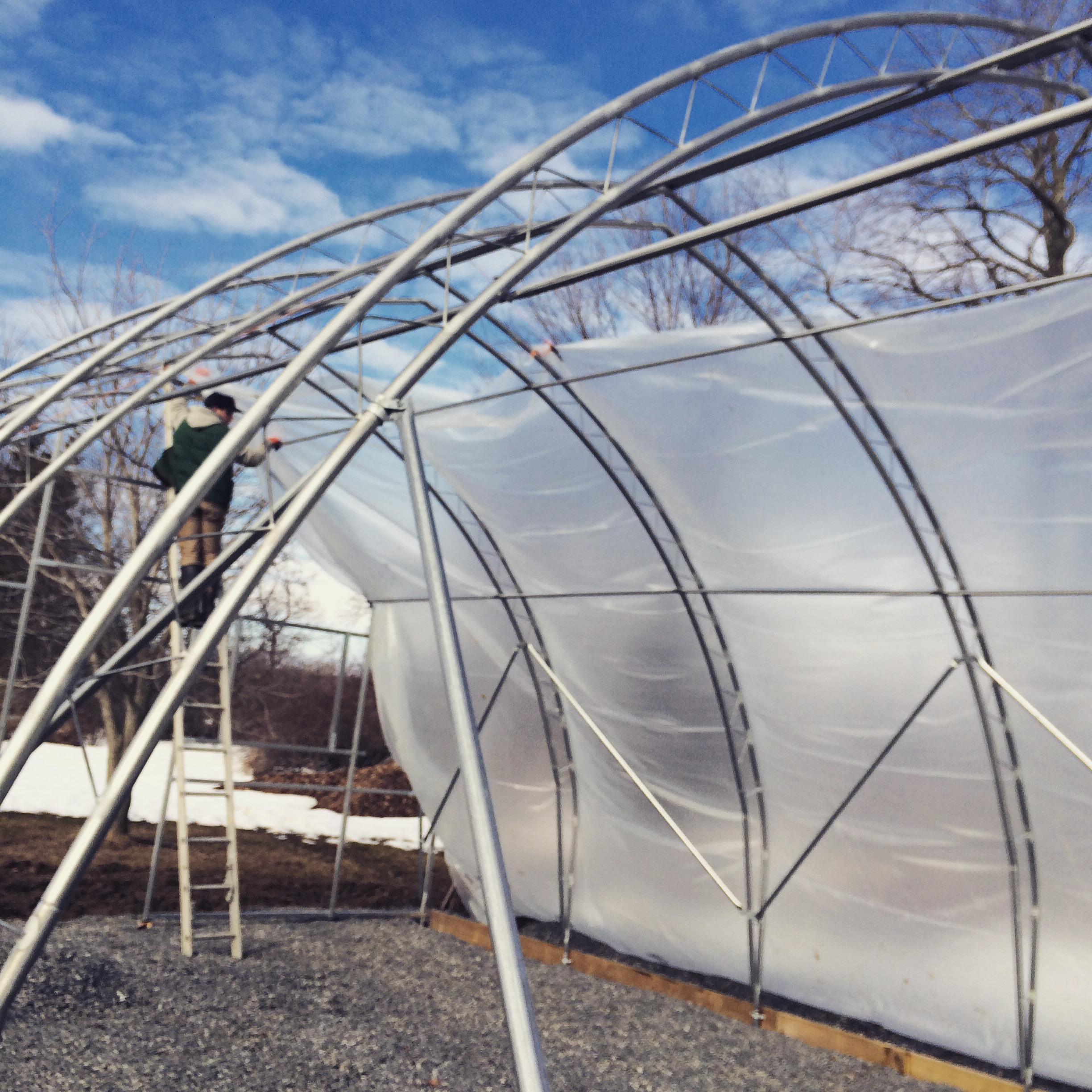 Poly goes on the greenhouse!