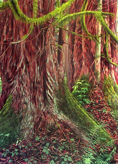 Two Big Cedars.jpg