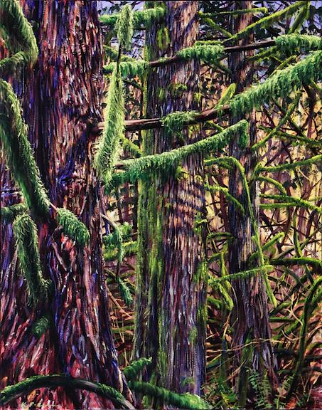 Cedars, February.jpg