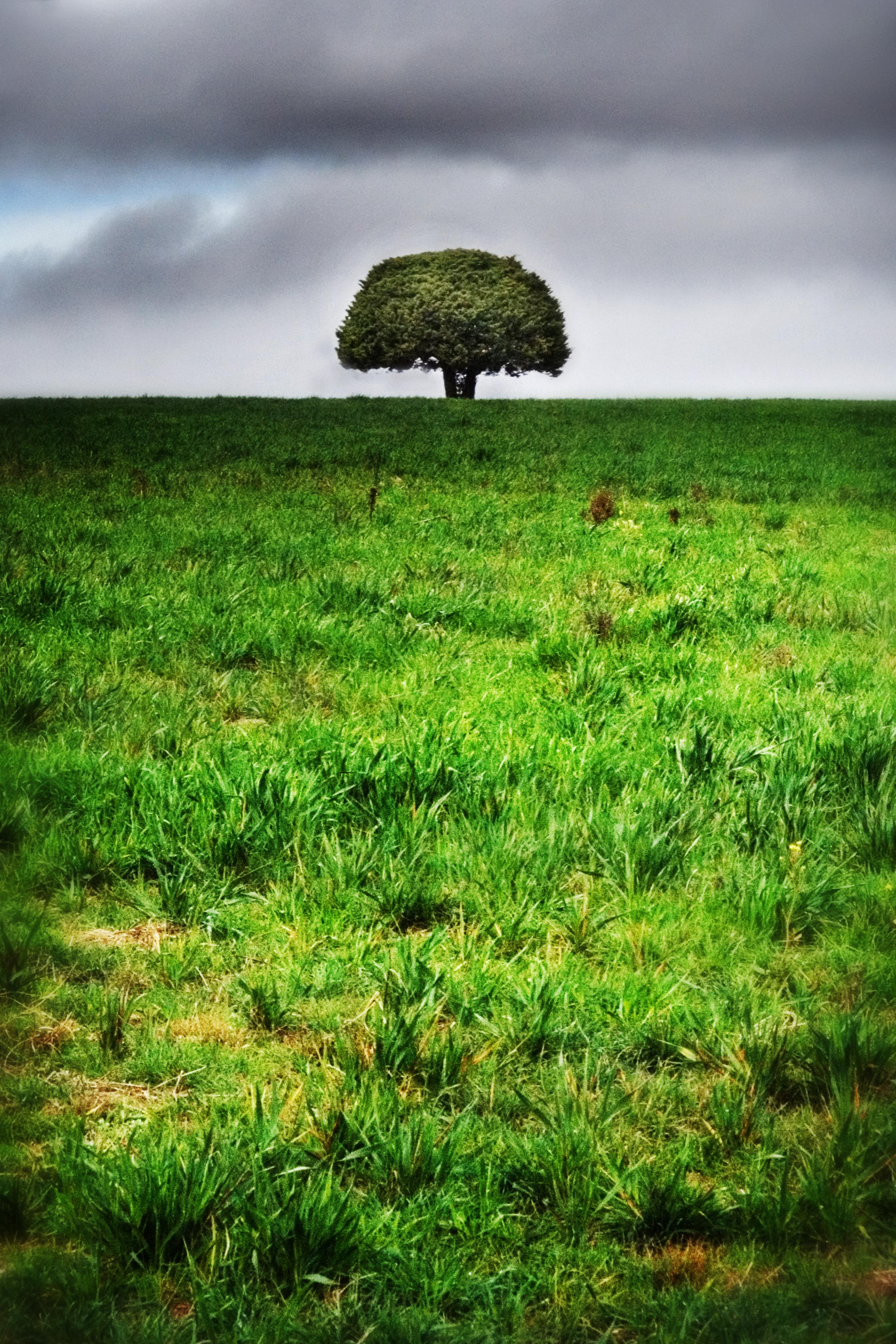 green tree Walcha copy.jpg