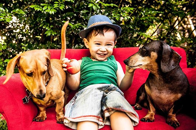 Oh the lil men! #daschund #dogsandkids #photographer #brisbaneportraitphotographer