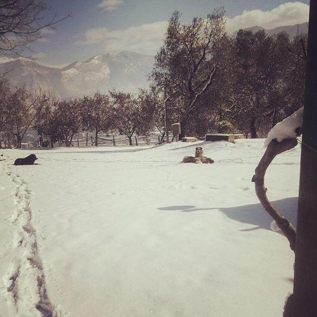 In questo pomeriggio piovoso ci piace ricordare la calma e la quiete. Anche i nostri Matteo, Broccolino e Sid si sono goduti la neve di qualche giorno fa.  E domani come ogni domenica riapriamo i battenti!  #agriterranova #terranovaagriturismo #neve #snow #terranovaimbiancata