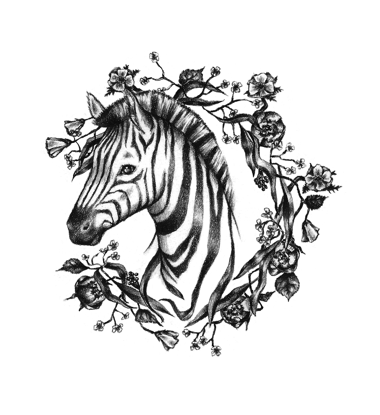 zebra_LR.jpg