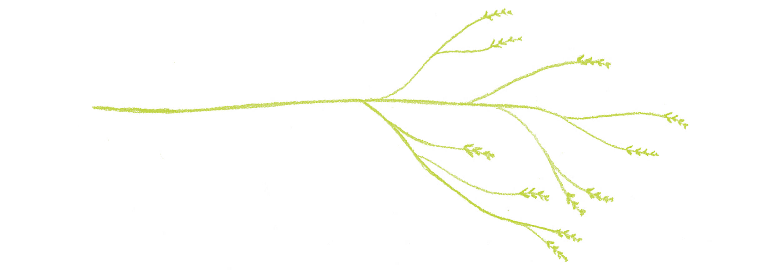 branches6.png
