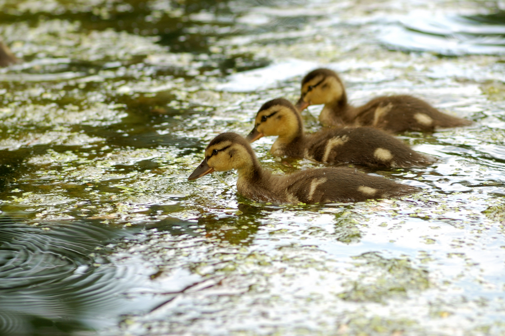 Get your ducks in the right order, not just in a row