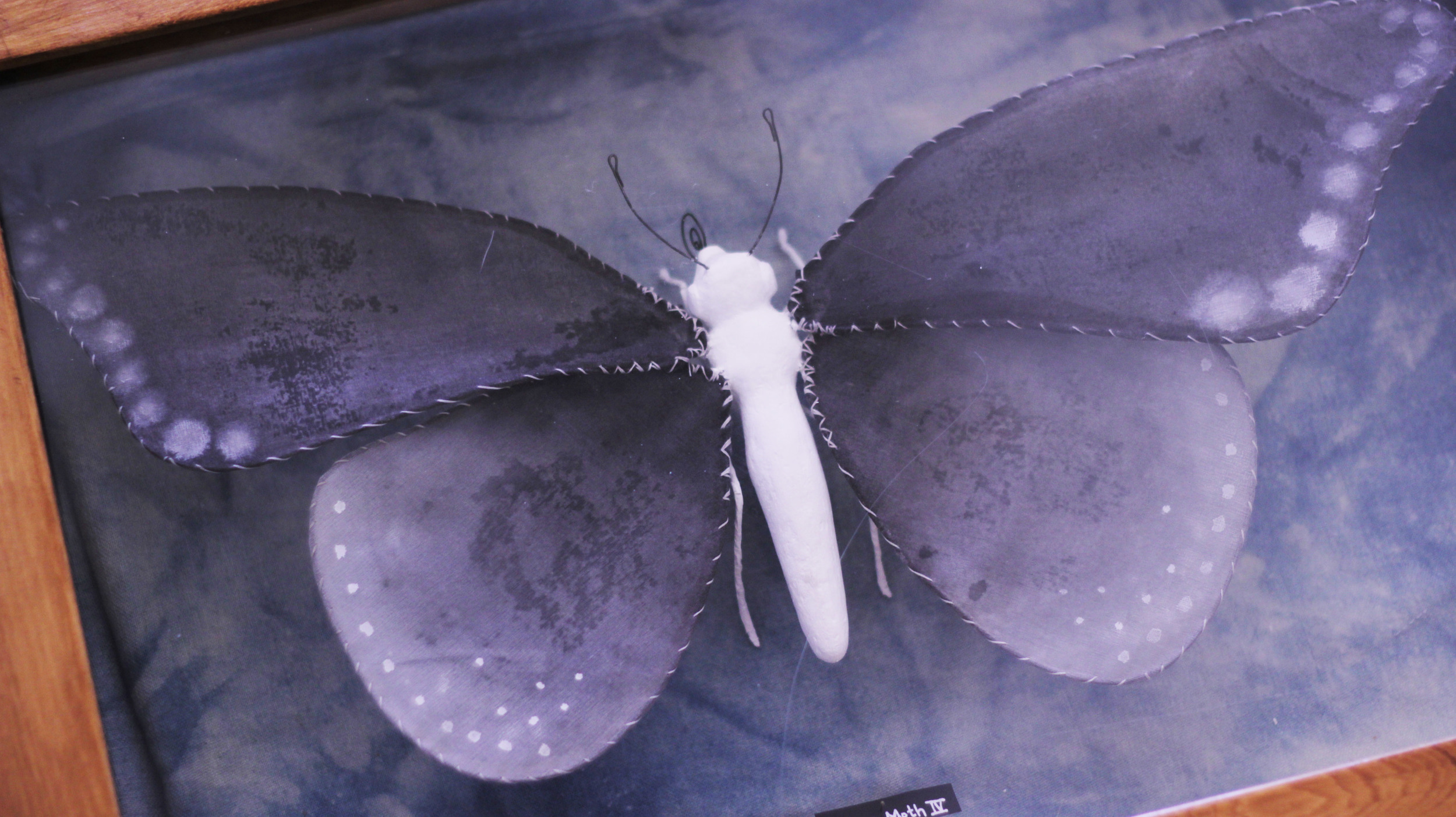 """Illuminated Creatures: Moon Moth Series"""