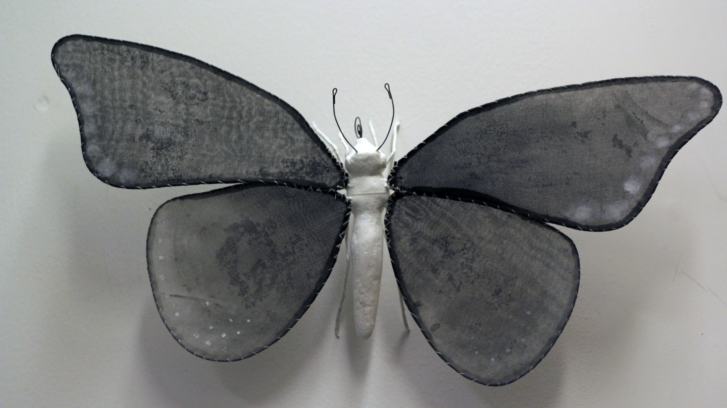 """Illuminated Creatures: Moon Moth IV"""