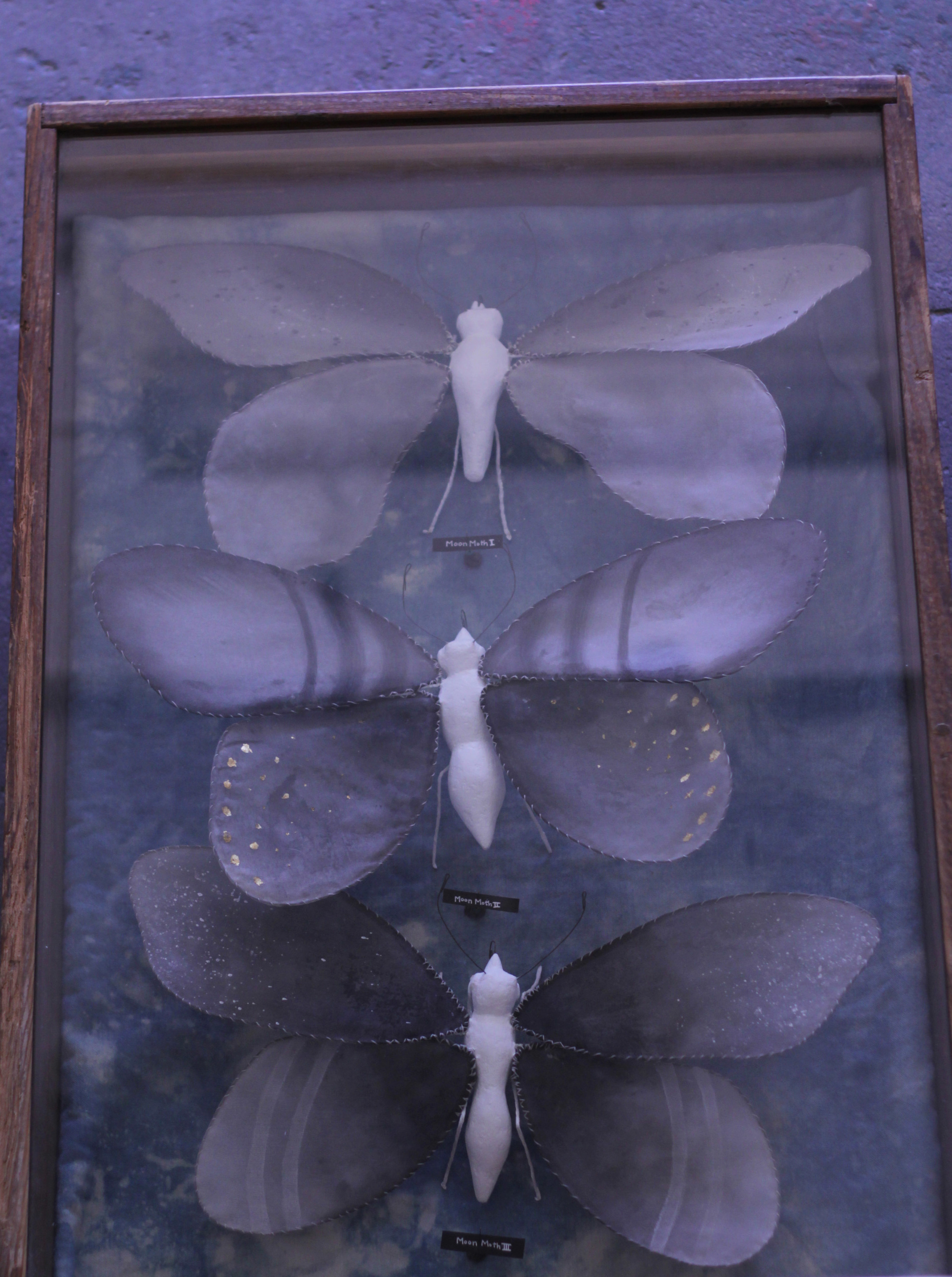"""Illuminated Creatures: Moon Moths I, II, & III"""