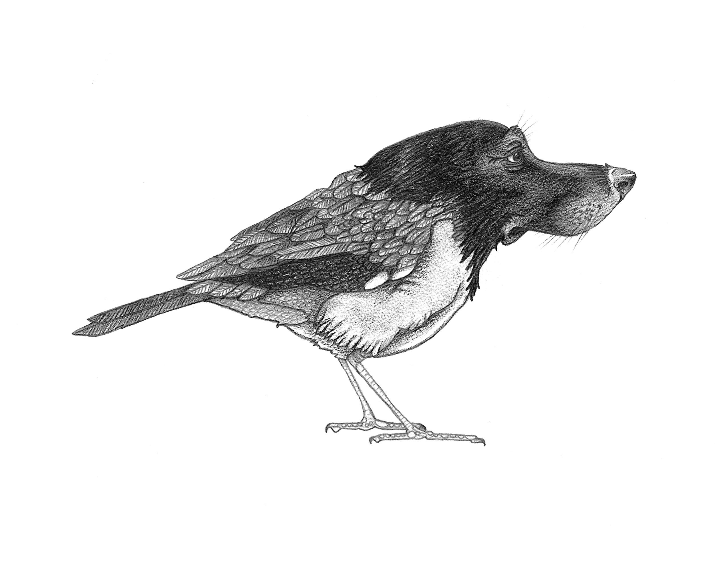 """""""The BirdDog"""""""