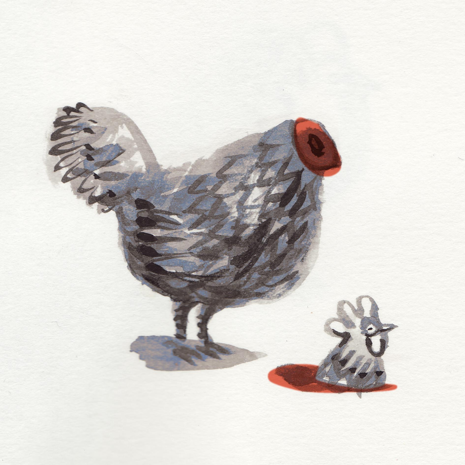 kip zonder kop.jpg