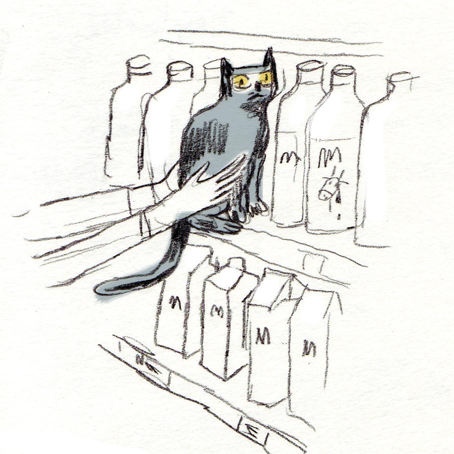 kat bij de melk.jpg
