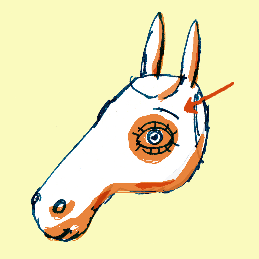 paardenoog.jpg