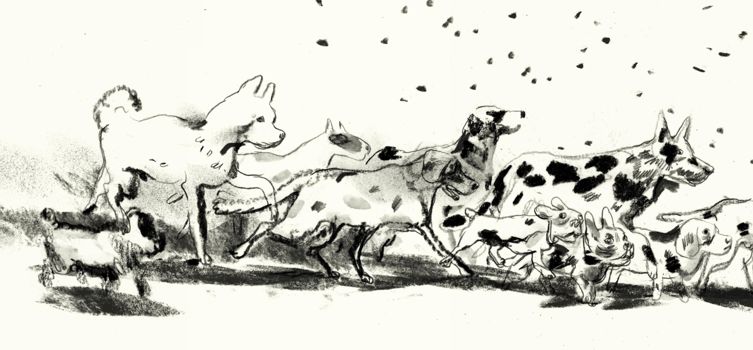 hondenstoet2.jpg